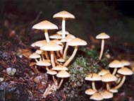 Fungi in the South Arthur Forests